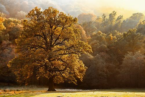 Beautiful tree of colour autumn scenery